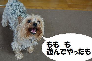 dog270.jpg