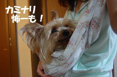 dog271.jpg