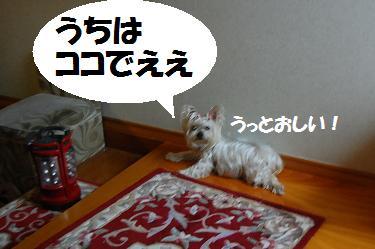 dog272.jpg