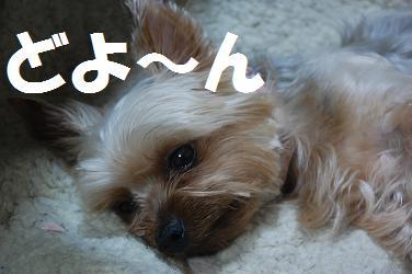 dog274.jpg