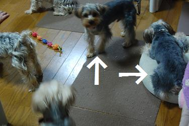 dog275.jpg