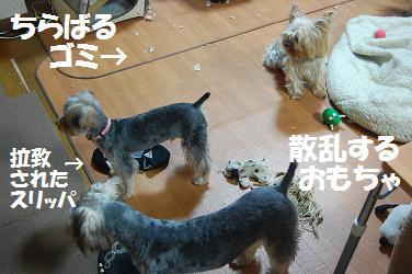 dog276.jpg