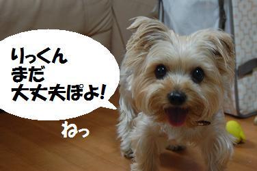 dog277.jpg