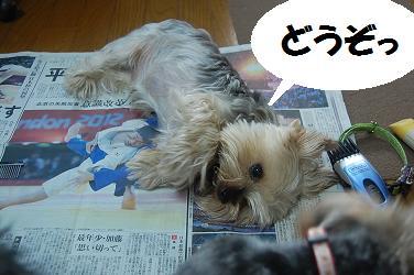 dog278.jpg