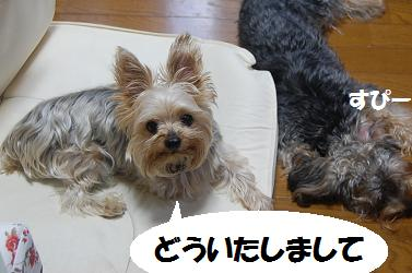 dog279.jpg