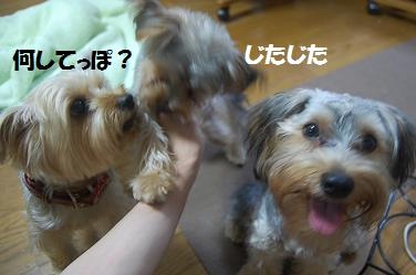 dog281.jpg