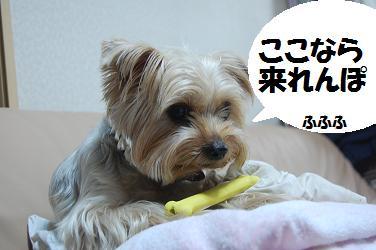 dog282.jpg