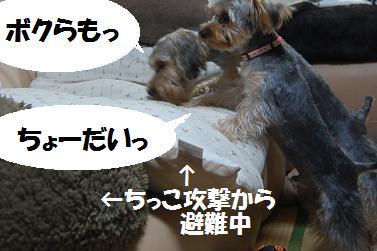 dog283.jpg