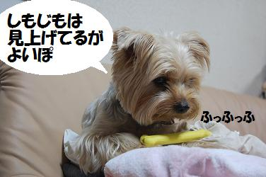 dog284.jpg