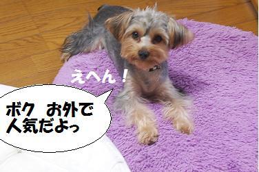 dog285.jpg