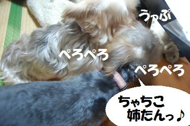 dog286.jpg