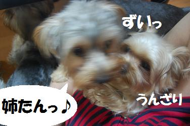 dog287.jpg