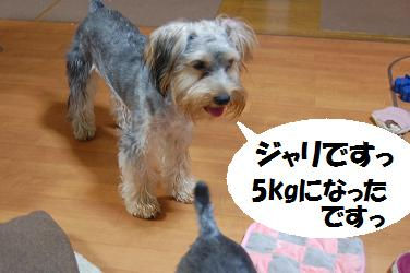 dog289.jpg