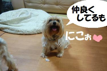 dog291.jpg