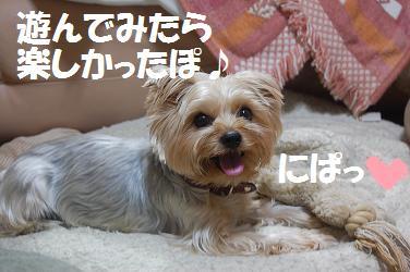 dog292.jpg
