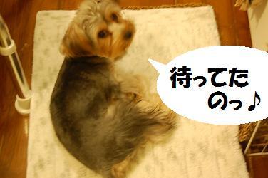 dog293.jpg