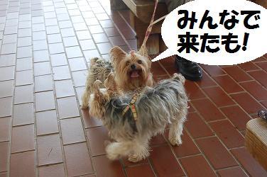 dog294.jpg