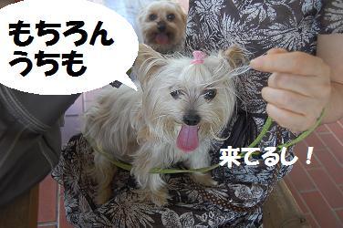 dog295.jpg