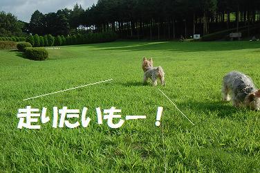 dog296.jpg