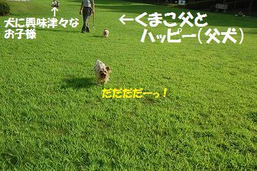 dog297.jpg
