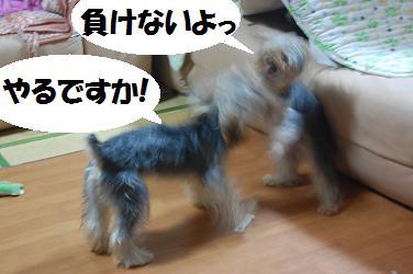 dog298.jpg
