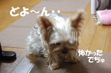 dog302.jpg