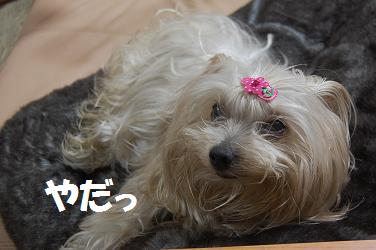 dog321.jpg