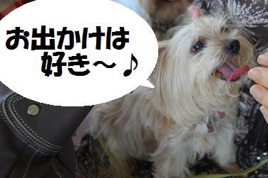 dog322.jpg