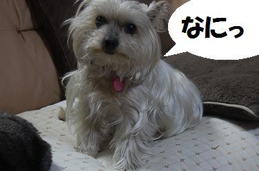dog324.jpg