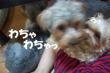 dog325.jpg