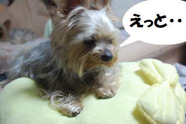 dog326.jpg