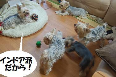dog327.jpg