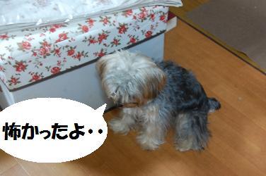 dog328.jpg