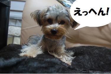 dog329.jpg