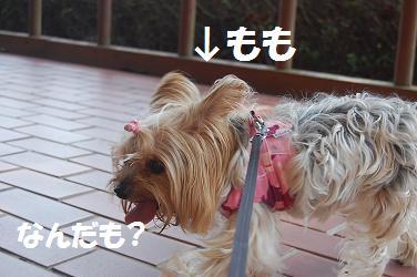 dog331.jpg