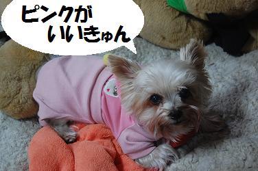 dog332.jpg