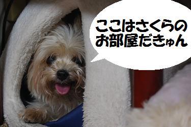 dog333.jpg