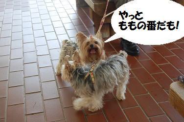 dog334.jpg