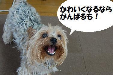 dog335.jpg