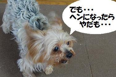 dog336.jpg