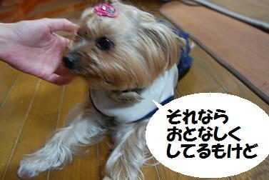 dog339.jpg