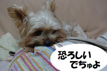 dog401.jpg