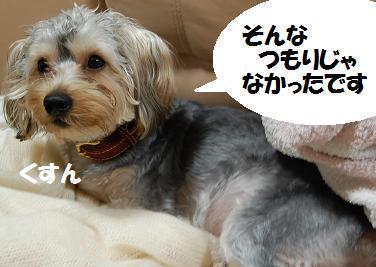 dog404.jpg