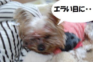 dog405.jpg