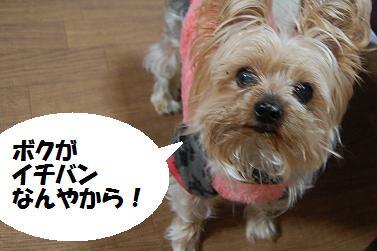 dog406.jpg