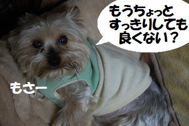 dog407.jpg