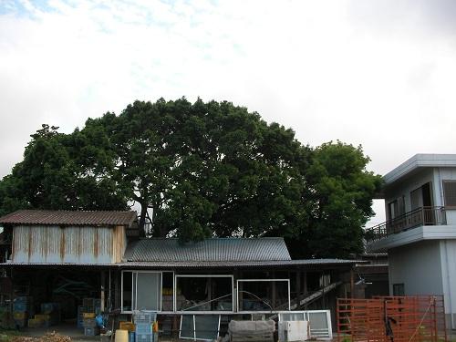 裏の木629