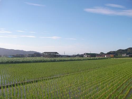 水田716