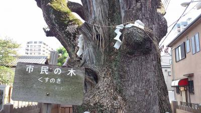 mini_12_taiboku_DSC_0246.jpg