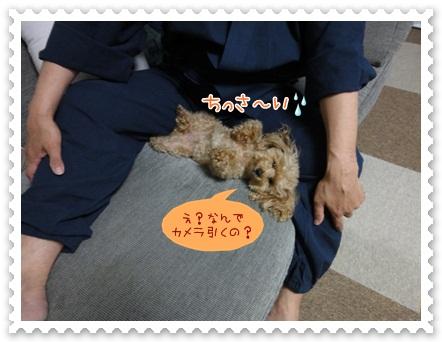 b11_20120607203901.jpg